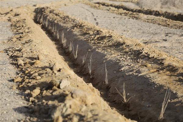 支付宝:蚂蚁森林里程碑!5亿人种下1亿棵真树 生活资讯 第1张